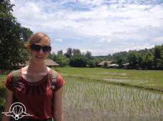paddy fields chiangmai